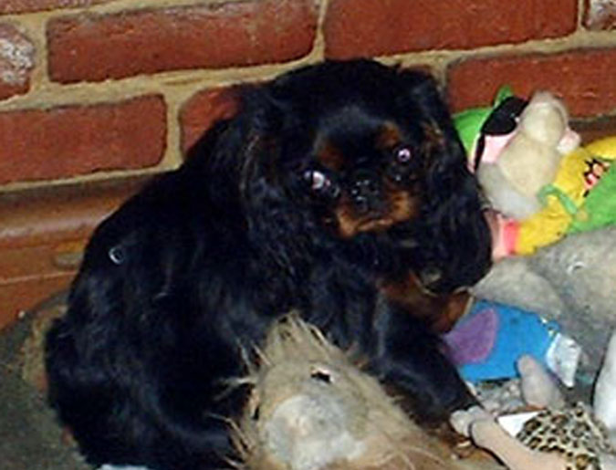 [Missy with some of her toys - 2001]